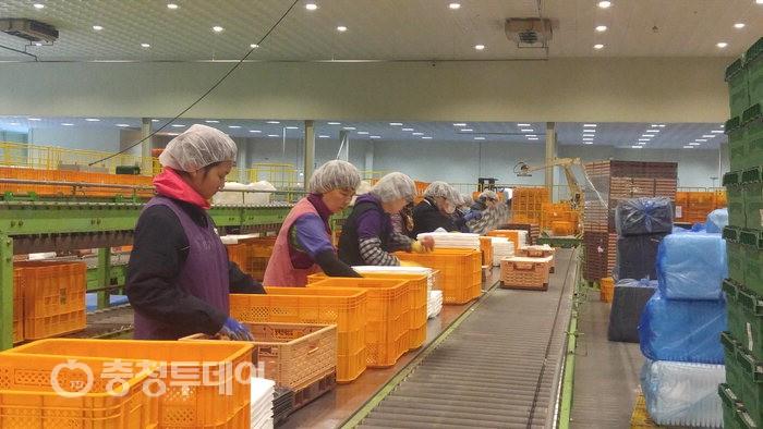 충주거점농산물산지유통센터 운영평가 전국 1위